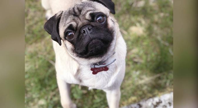 Vil du ha en hundepasser som har erfaring med hund, hundepassere i Bergen