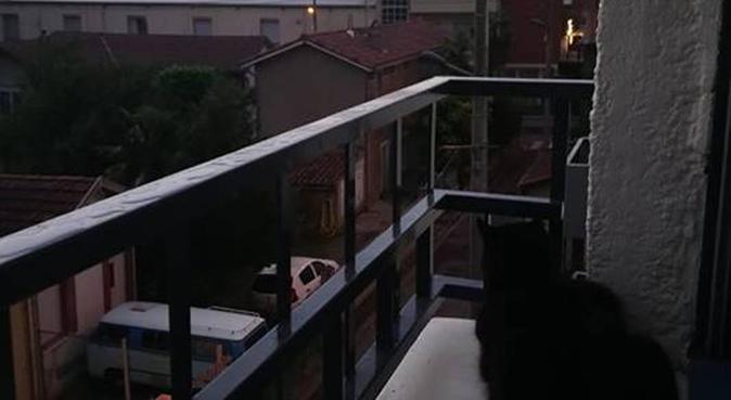 Promenade,hébergement et câlineuse pro à Toulouse, dog sitter à Toulouse