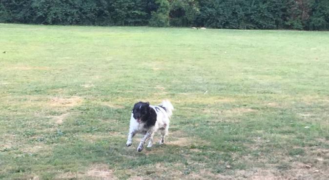 Hondenoppas in Huizen in huiselijke sfeer, hondenoppas in Huizen