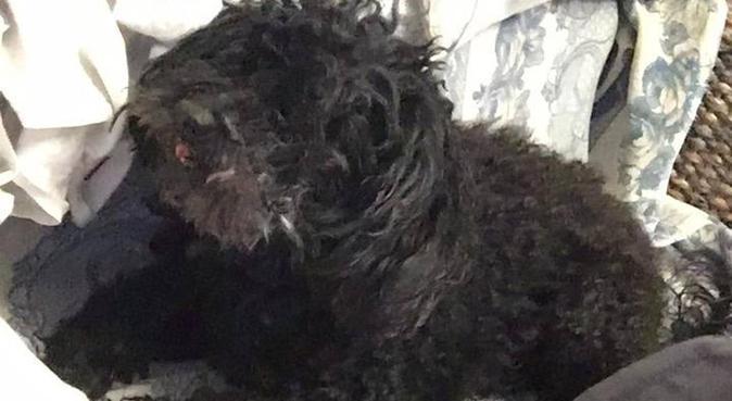 Passeggiate e tanto divertimento per i vostri cani, dog sitter a Palermo, PA, Italia