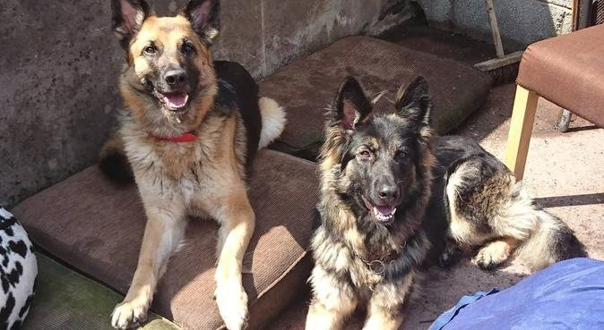 S&K pet services, dog sitter in Stoke-on-Trent