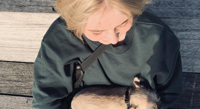 Kärleksfull hundpassning på trossö, hundvakt nära Karlskrona, Sverige