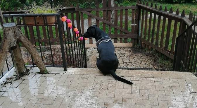 Passeggiate e coccole assicurate!, dog sitter a Roma