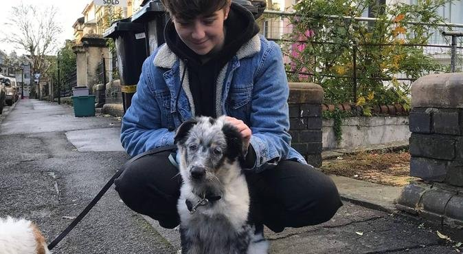 Experienced and fun dog sitting in Bristol, dog sitter in Bristol, UK