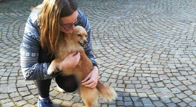 Active walks and cuddles for all pups!, hundvakt nära Huddinge, Svezia