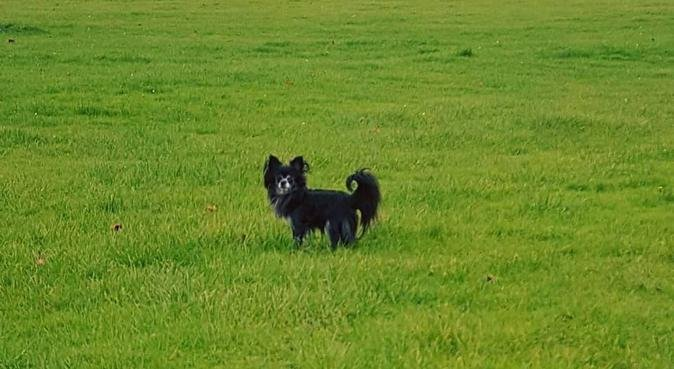 Muddy Memories Pet Care, dog sitter in Aberdeen