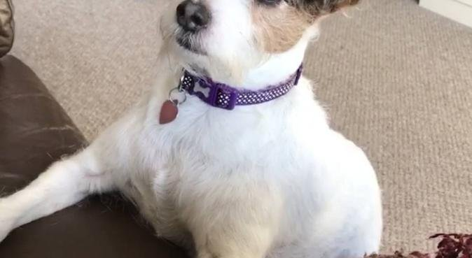 Dog devoted, dog sitter in Chester