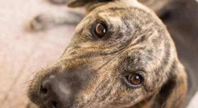 Vierpfoten-Dresden bietet Gassiservice, Hundesitter in Freital
