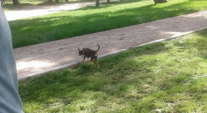 La recreación y seguridad para su perro, canguro en Madrid