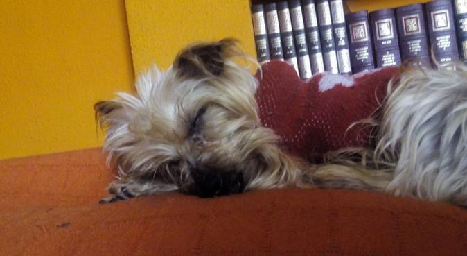 Trataré a tu perrito como al mío y amo al mío, canguro en Madrid