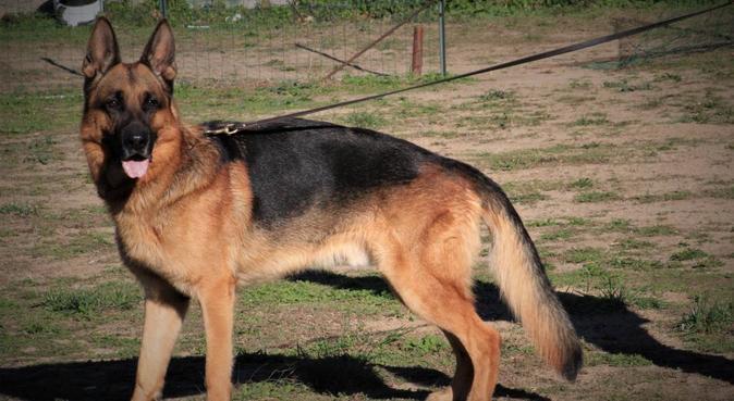 Dog sitter con anni di esperienza e tanta passione, dog sitter a Genova