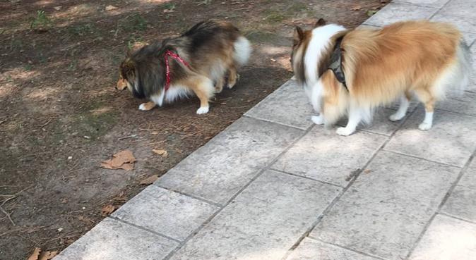 Le paradis pour chiens avec pleins de câlins, dog sitter à Vallauris, France