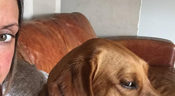 Doggie day care, dog sitter in Exeter