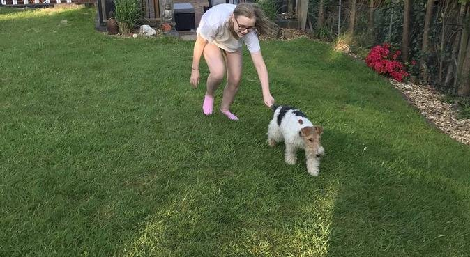 Dog walking and sitting in Streetly/ Sutton, dog sitter in SUTTON COLDFIELD