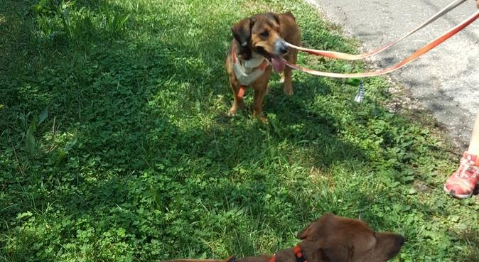 Coccole gioco e passeggiate a 6 zampe!, dog sitter a Roma