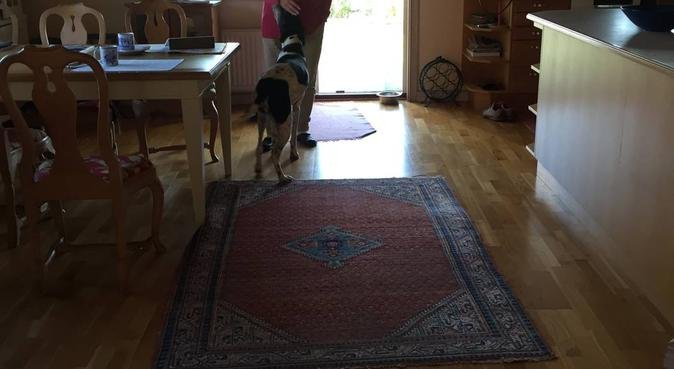 Erfaren hundpassning i Åsa, hundvakt nära Åsa, Sverige