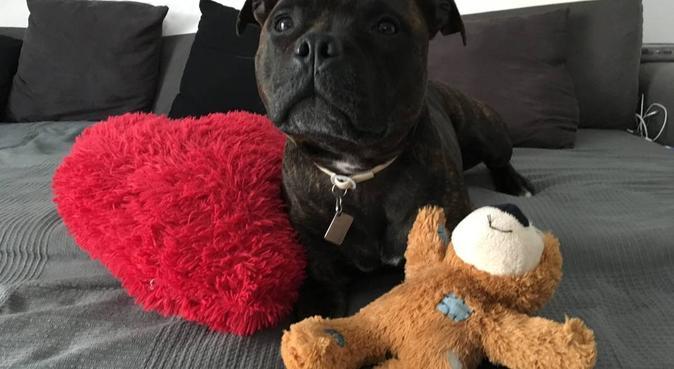 L expérience L'amour et le bien-être des toutous, dog sitter à Marseille, France