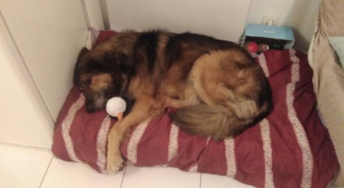 Petite vacances pour vos toutou!, dog sitter à ST AIGNAN GRANDLIEU