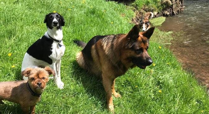Group and solo walks in Herefordshire, dog sitter in Hereford