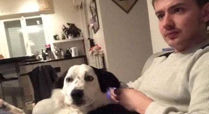 Bonheur canin près de chez vous, dog sitter à Le Chesnay