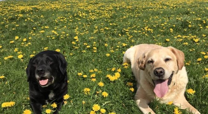 uni student missing my doggies! walker in Leeds:), dog sitter in Leeds
