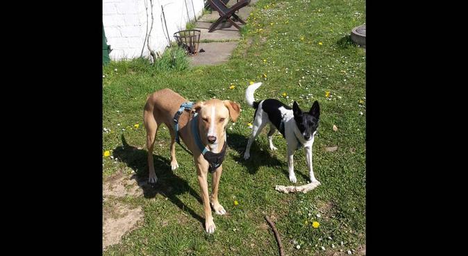 Täglicher Auslauf mit ihren Vierbeinern, Hundesitter in Kiel