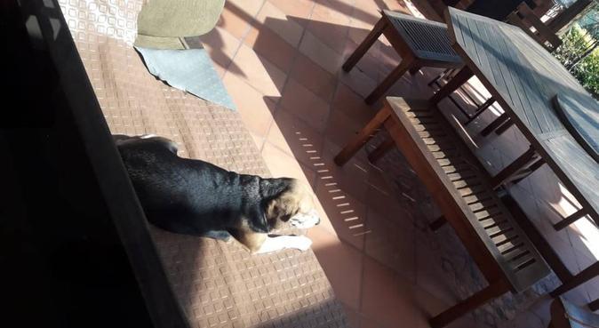Dog Paradise - Coccole di Cani, dog sitter a Milan, Metropolitan City of Milan, Italy