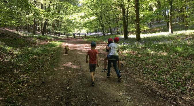 Dog walking with Poochy Pal, dog sitter in Ashford