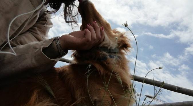 Giò, la migliore amica degli amici a quattro zampe, dog sitter a Firenze, FI, Italia