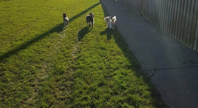 Animal Lover here to help !!!!, dog sitter in Newhaven