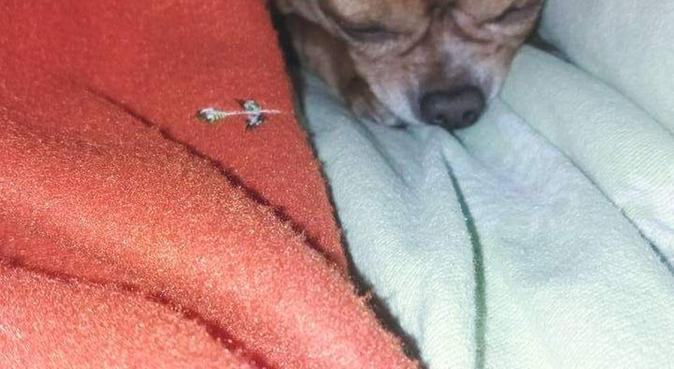 pronta a prendermi cura dei vostri amici a 4 zampe, dog sitter a Roma, RM, Italia