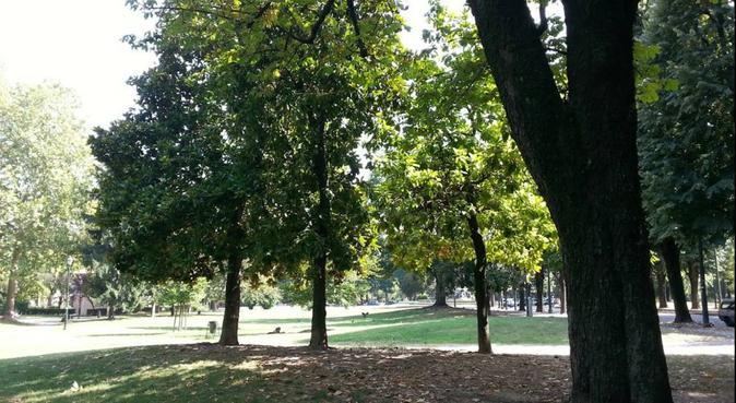 Passeggiate, giochi e coccole, cosa c'è di meglio?, dog sitter a Torino