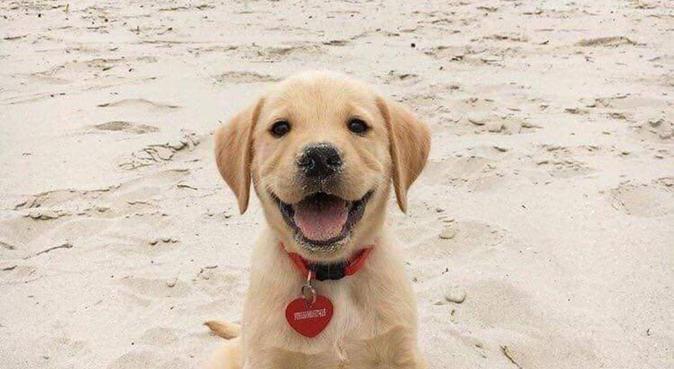 Solo il meglio per i vostri amici a 4 zampe!!!, dog sitter a Parma