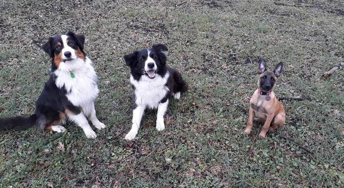Per tutte le esigenze!, dog sitter a San Gregorio di Catania, CT, Italia