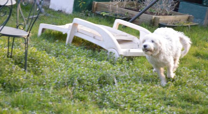 club vacances chiens, dog sitter à Vernouillet
