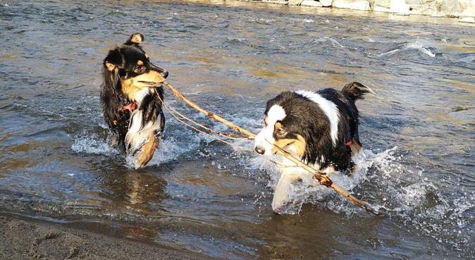 Promenades variées pour vos chiens, dog sitter à VILLEFRANCHE SUR SAONE