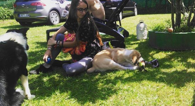 Acreditación oficial de cuidador de animales, canguro en Avilés