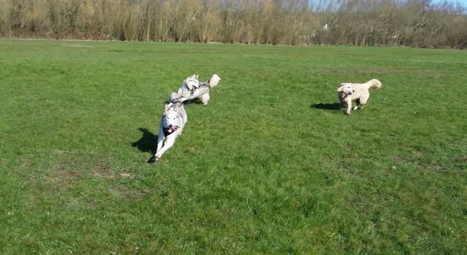 Pawfect walking buddy, dog sitter in Nottingham