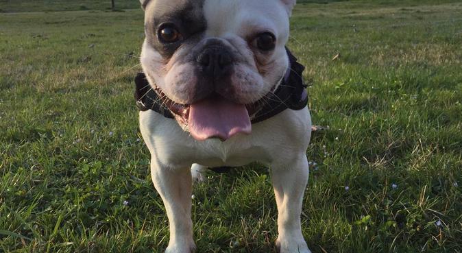 Pet  friendly 💕, dog sitter a Pioltello