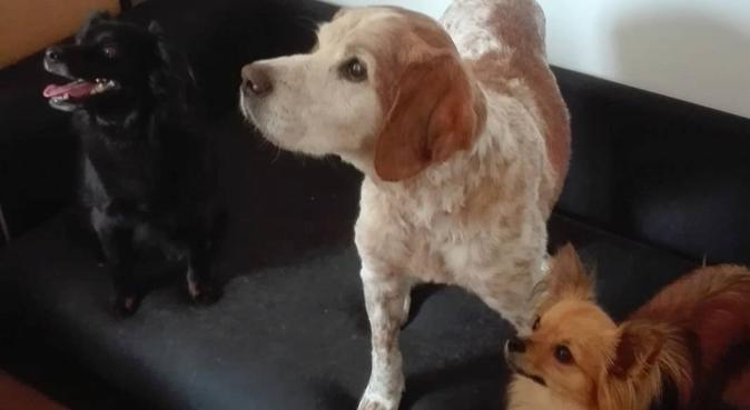 Les Petites Truffes, dog sitter à ANGLET