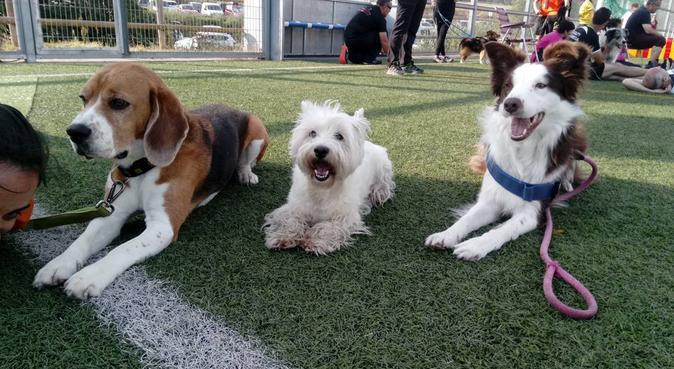 Paseadora de perros en Reus, canguro en Reus