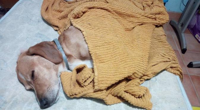 coccole giochi e passeggiate con gli amati cani, dog sitter a Roma