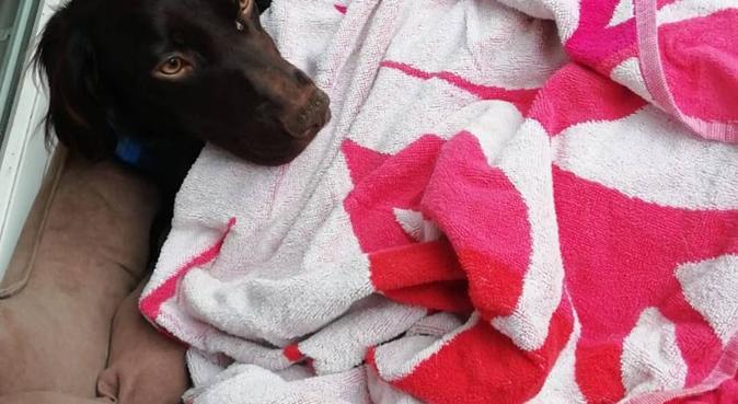 Le coin de l'amour pour toutous 🐶, dog sitter à Morlaas, France