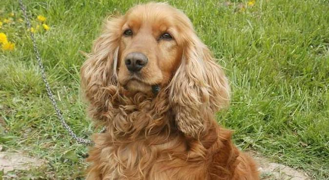Dog sitter in cerca di amici a 4 zampe, dog sitter a Pisa