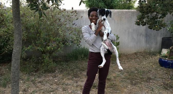 En avant pour une promenade dans la bonne humeur !, dog sitter à Pessac