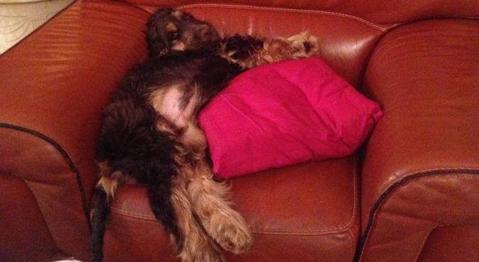 La meilleure amie des chiens, dog sitter à Saint-Évarzec