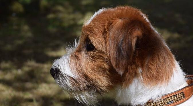 Kärleksfull hundrastning och passning i Kälvesta!, hundvakt nära Stockholm