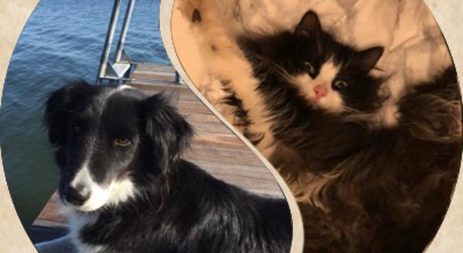 Kärleksfull hundvän i Kungsbacka, hundvakt nära Fjärås