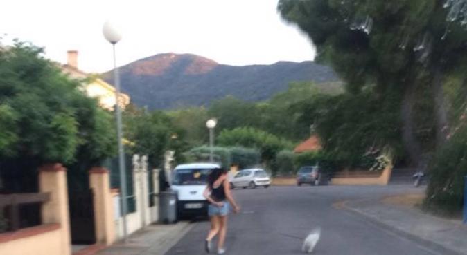 La joie des chiens à Montpellier, dog sitter à Montpellier, France