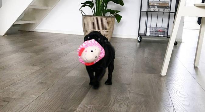 Litte dogs, big heart : welcome!, hondenoppas in Muiderberg